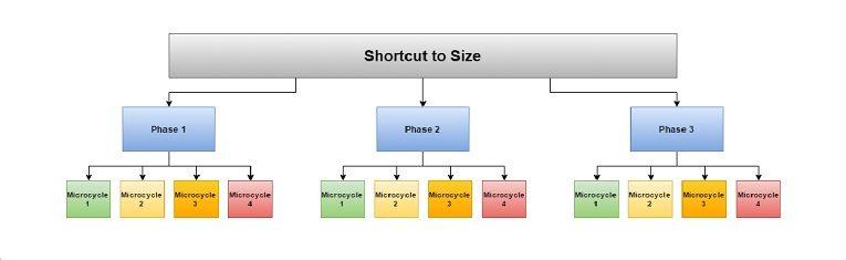 Jim Stoppani's 12 Week Shortcut to Size Review | CheckMeowt